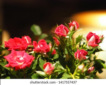 Beautiful red roses flower for background.