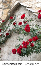 Beautiful red roses growing in front of old stone house. Selective focus.