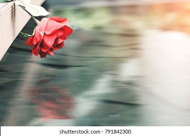 Beautiful red roses place on wooden floor reflexion on water