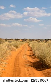 Beautiful red sand 4x4 off road track in Kgalagadi Transfrontier Park along border of Botswana and South Africa