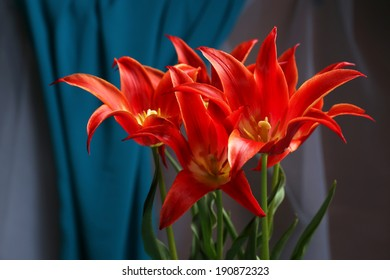 Beautiful red tulips on blue satin background