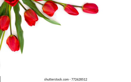 Beautiful red tulips on white background with space for text. Top view, flat lay.