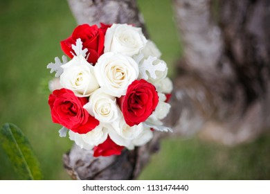 Beautiful red and white rose flower on the tree branch