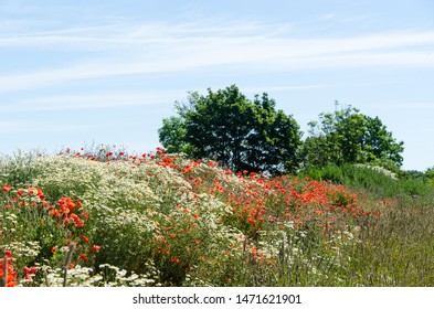 Beautiful red and white summer flowers by a blue sky