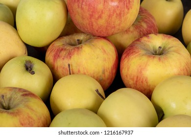the beautiful red and yellow organic apples