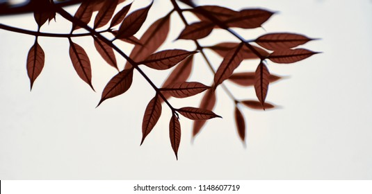 Beautiful reddish leaves of a tree isolated unique blurry natural photo