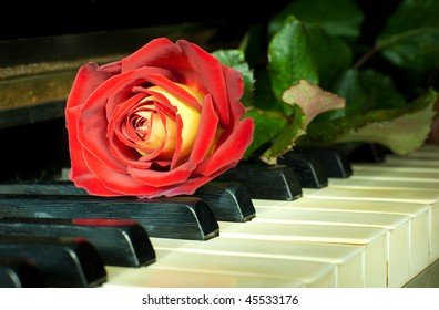 Beautiful red-yellow rose on the ivory keys of ancient German piano