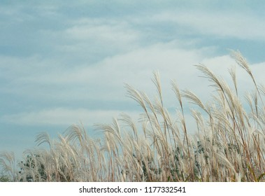 Beautiful reed beds
