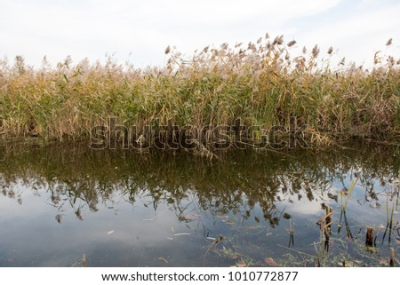Beautiful reeds reflected in the water