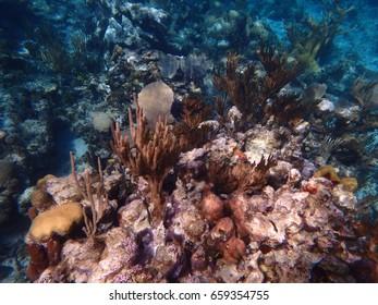 The beautiful reef of the Atlantic Ocean in Holguin, Cuba is a snorkeling haven.