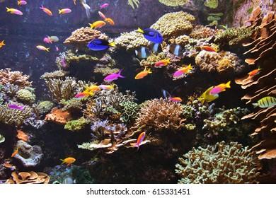 Beautiful Reef Coral