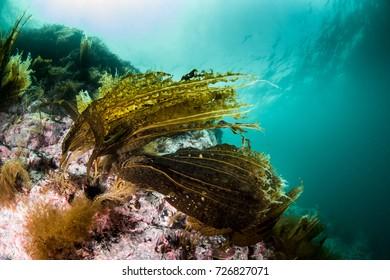 Beautiful reefscape with sea algae
