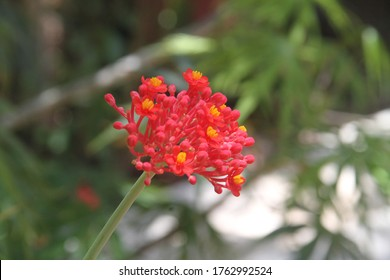 Beautiful ref flower closeup in tropical garden