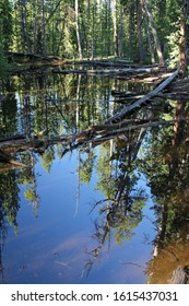 A beautiful reflecting pool in the middle of the forest