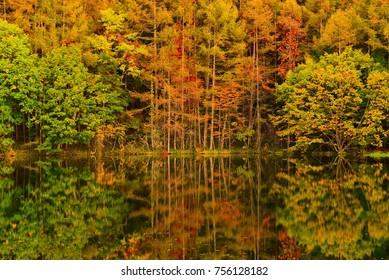 Beautiful Reflection of Autumn Leaves