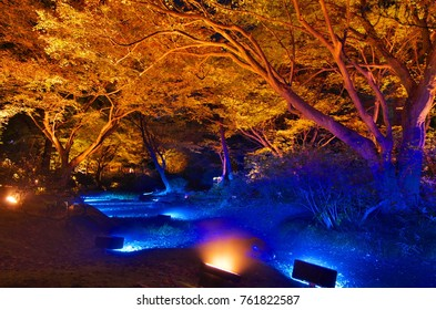 Beautiful reflection of autumn night view at the Rikugien Garden in Tokyo, Japan. November 24, 2017.