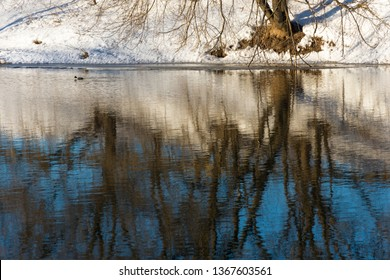Beautiful reflection of trees in the mirror of a river with a floating duck on a spring day.