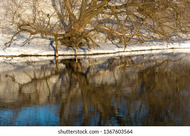 Beautiful reflection of trees and snow in the blue mirror smooth surface of the river.