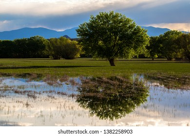 Beautiful reflections at Bosque del Apache National Wildlife Refuge in evening light as storm clouds move in