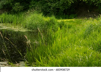 A beautiful, relaxing summer landscape of a riverside