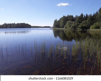 Beautiful restful scene from rocky waterline beach over bed of reeds into blue lake and wild forest shore with bushes and birch trees summer day in Kuusamo Finland