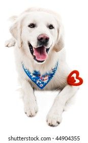 A beautiful retriever with a heart shaped toy