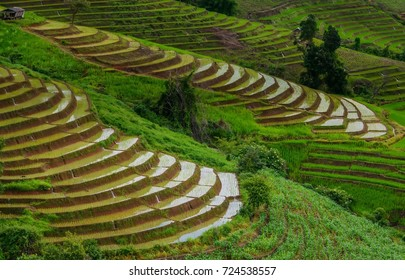 Beautiful Rice field landscape,Green Rice fields terraced on mountain in Chiang Mai Thailand.Thailand landscapes.