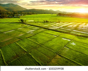 A beautiful rice field view of Chiang mai, Thailand.