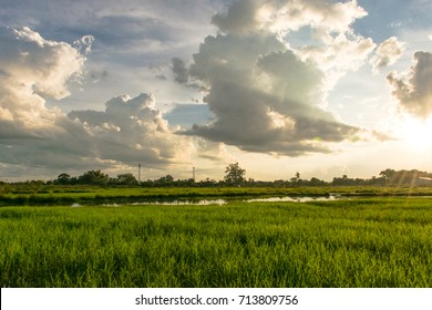 Beautiful rice fields over the mountain range.Rice field green grass blue sky cloud cloudy landscape background  at sunset,Green rice field at sunrise.