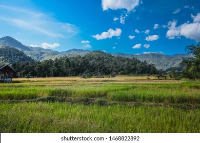 The beautiful rice fields in Pai, Thailand. With bluesky and clouds. Nature is the most beautiful.