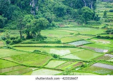 The beautiful rice fields scenery in spring