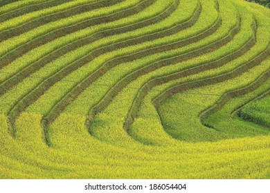 Beautiful Rice Terrace in Mu Cang Chai, Vietnam