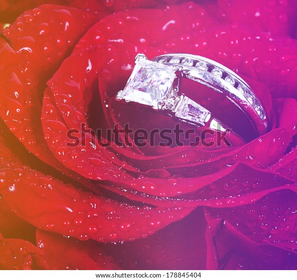 Beautiful Ring Rose Instagram Effect Stock Photo (Edit Now