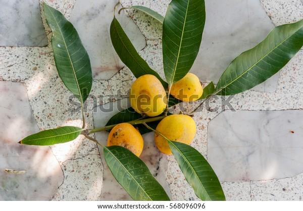 Beautiful Ripe Mango