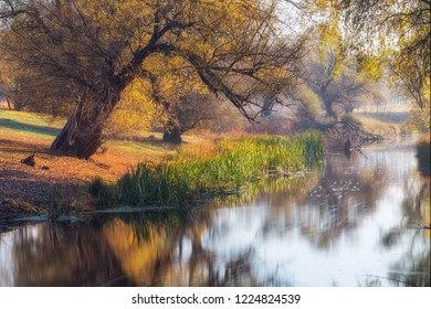 Beautiful river bank with old trees in autumn