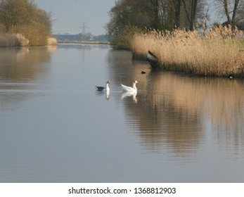 beautiful river with cloured sky, geese and sun in the background