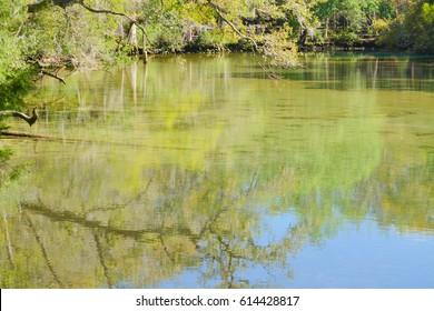 A beautiful river with a deep pool at Homasassa Springs State Park in Homasassa, Florida