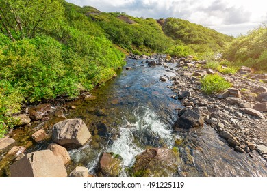 beautiful river in a mountain forest on a sunny day