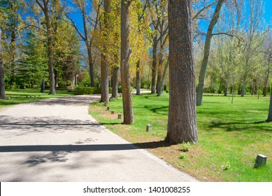 Beautiful road with curves in a lovely park with grass and trees in almazán