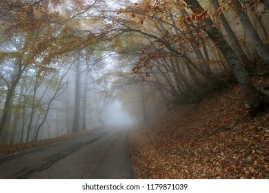 Beautiful road in a fog among the bent trees in the autumn forest
