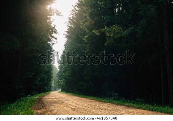 beautiful road in the forest at dawn