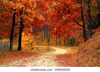 Beautiful road forest fall colorful view