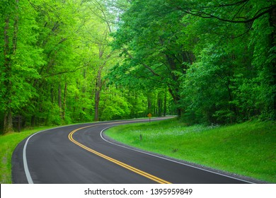 Beautiful road in the forest. Great Smoky Mountains. Tennessee. USA.