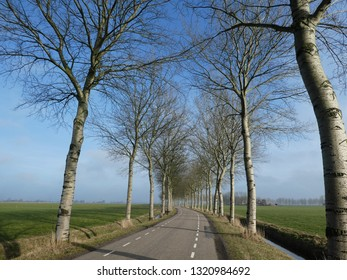 beautiful road lined with poplars in dutch landscape