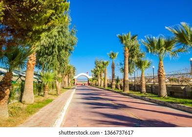 Beautiful road with palms near city Ayvalik, Turkey