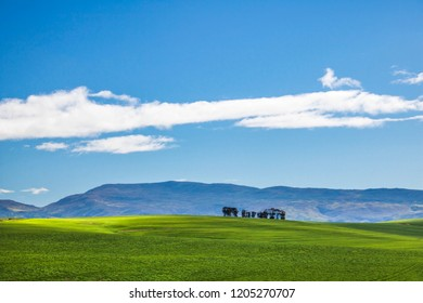 Beautiful rolling green fields and tree line with mountains in the distance with blue sky and cluds. Caledon, Western Cape, South Africa.
