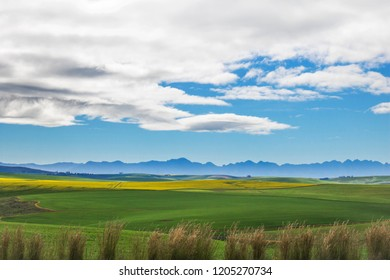 Beautiful rolling green and yellow fields with mountains in the distance with blue sky and cluds. Caledon, Western Cape, South Africa.