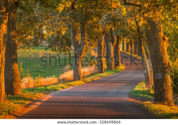 Beautiful romantic autumn alley colorful trees and sunlight