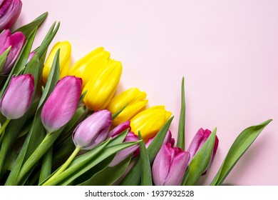 Beautiful romantic bouquet of purple and yellow tulips on a pale pink background . Lots of tulips, large bouquet. Copy space. Space for text.