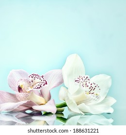beautiful romantic orchid flower background